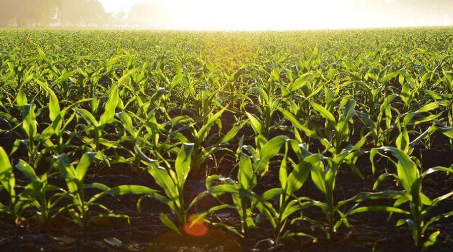 agricoltura fei